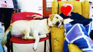 Il cane negli IAA Pet Therapy